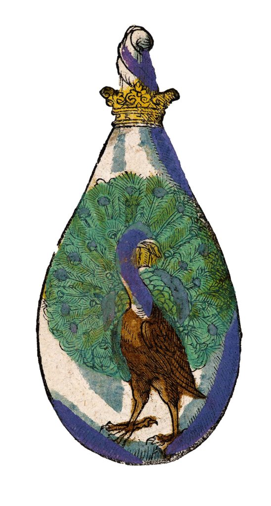 a drawing of a peacock in a bottle