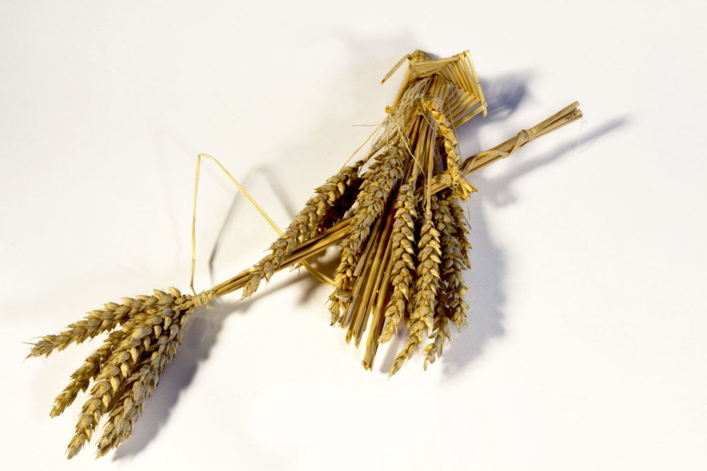 photograph of corn dolly in the shape of a witch on broomstick