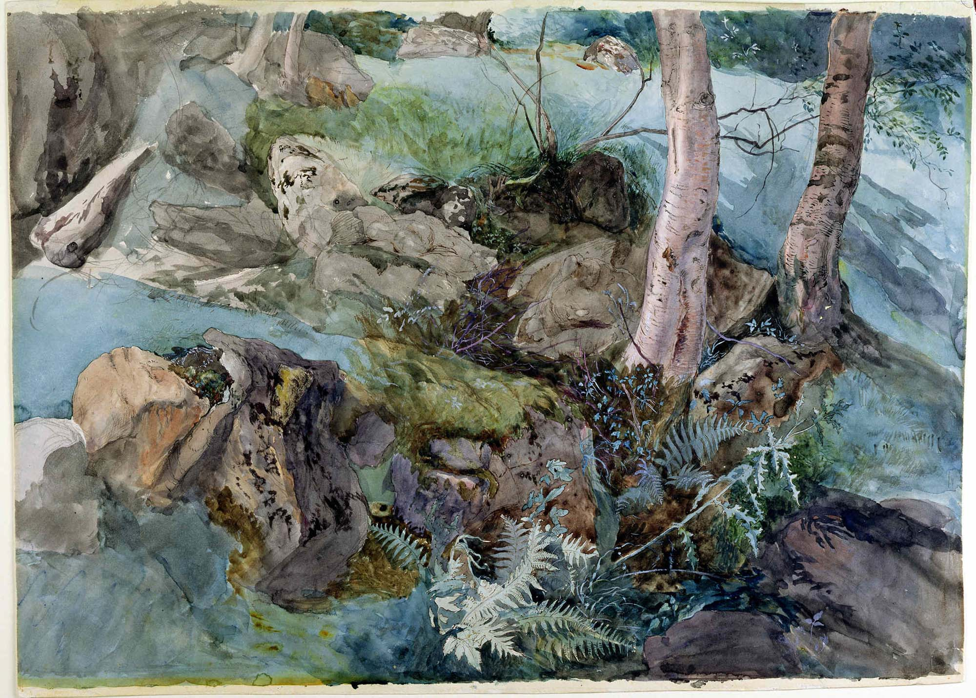 a detailed painting of rocks and ferns in a woodland