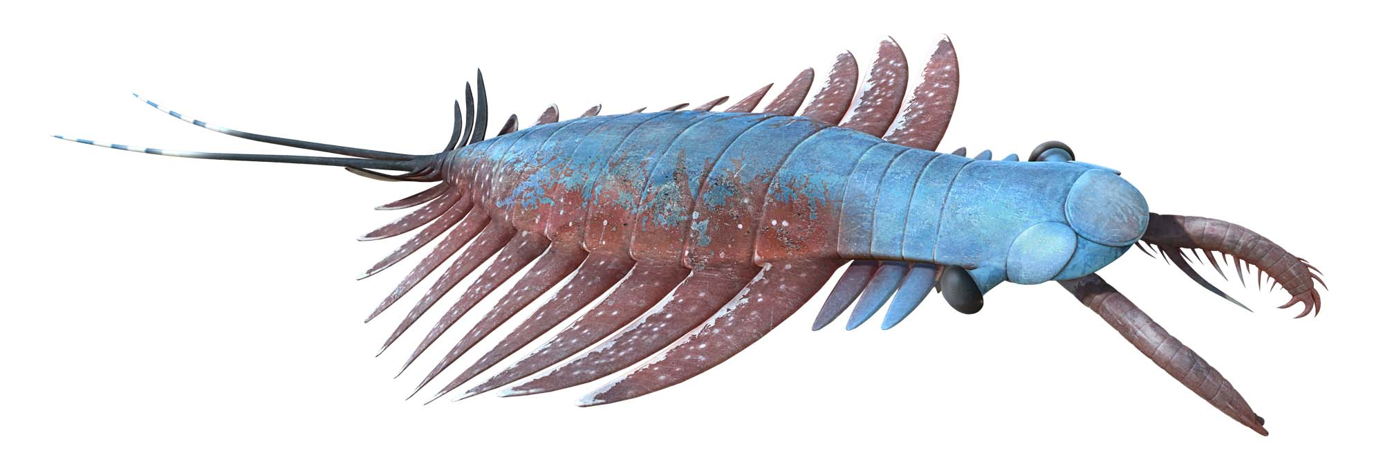 a photo of a mollusc, centipede like creature with front pincers