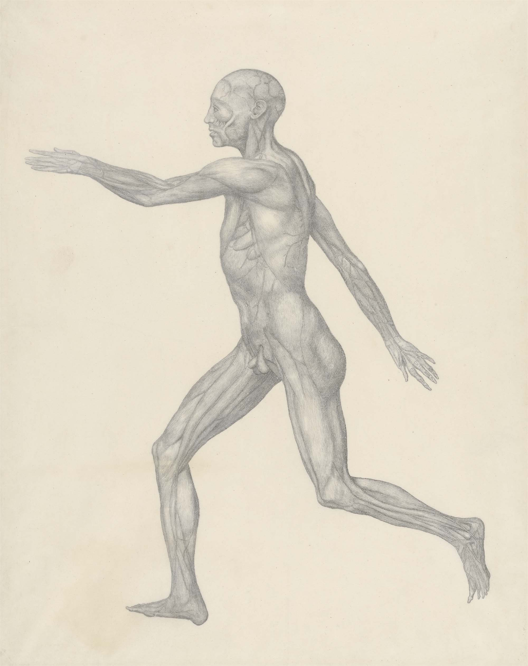 drawn side view of a man in motion showing muscle and sinew