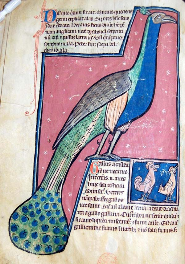 a medieval manuscript with a large picture of a peacock