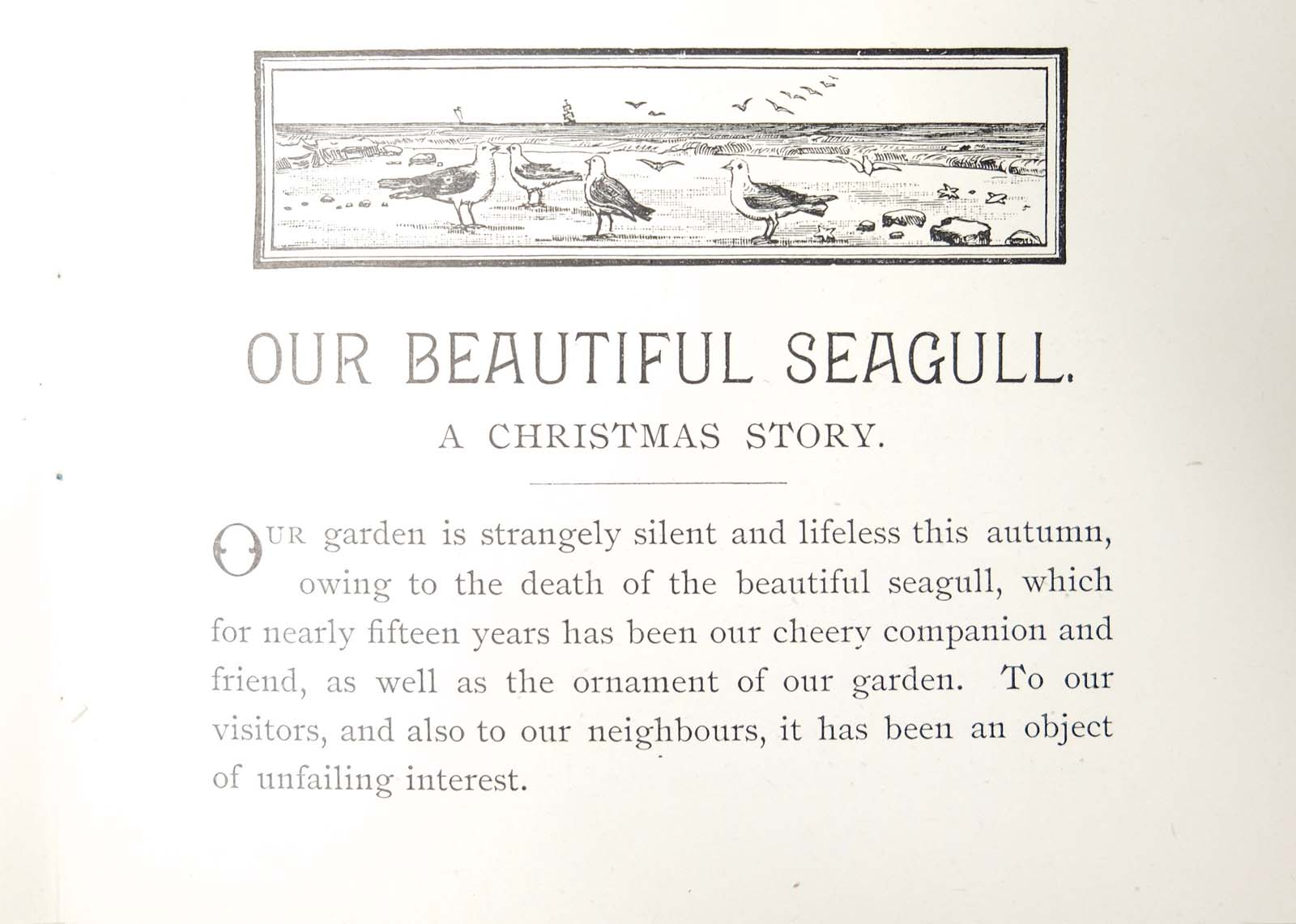 a printed page from a pamphlet about a seagull