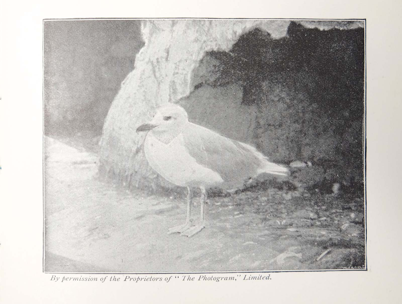 an old newspaper story with a picture of a seagull