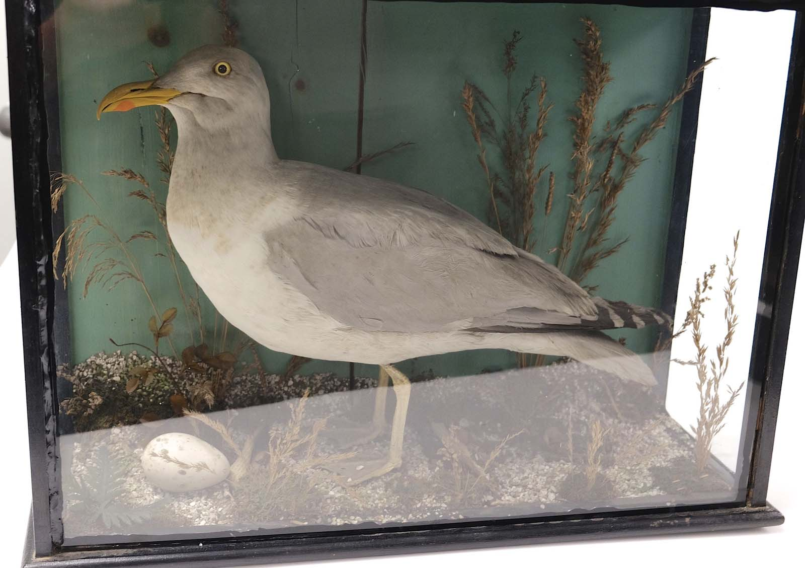 a photo of a seagull in a case