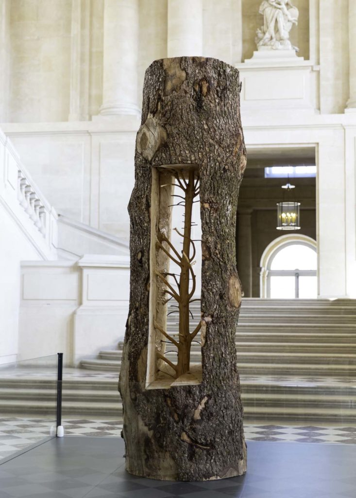 a photo of a tree trunk with a hollowed out centre revealing a smaller tree sculpted out of the tree's wood