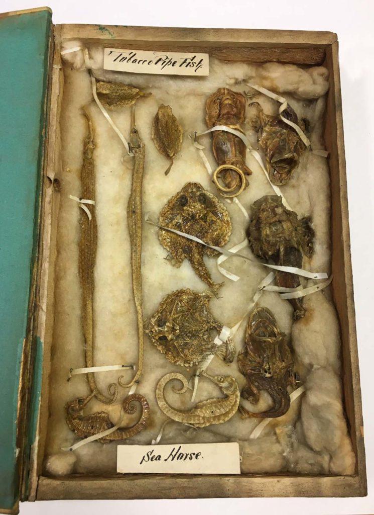 a box of old mummified fish