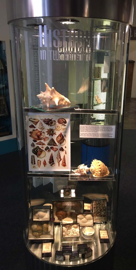 a crived glass display case filled with curious objects