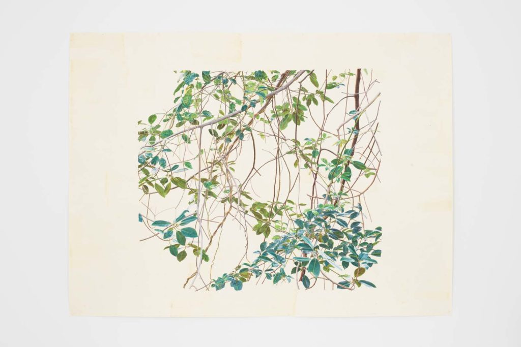 a watercolour of spindly tree branches