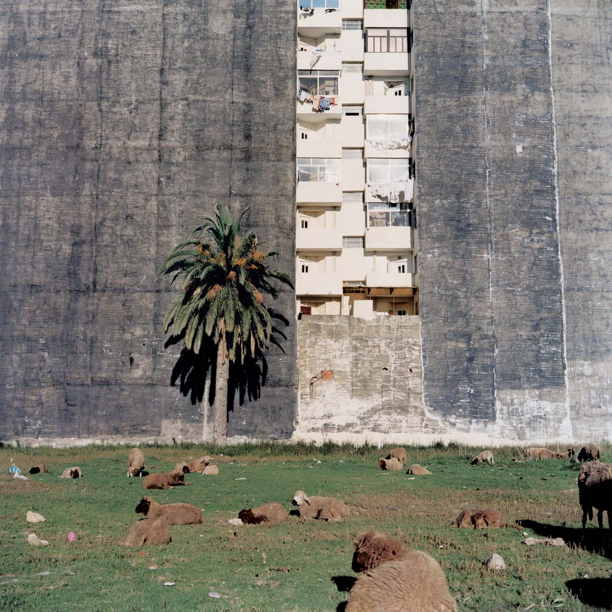 a photo of a block of flats with a tree, field and sheep in the foreground