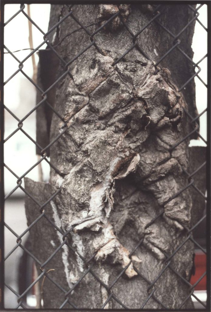 a photograph of tree trunk bark entwined and growing through a wire fence