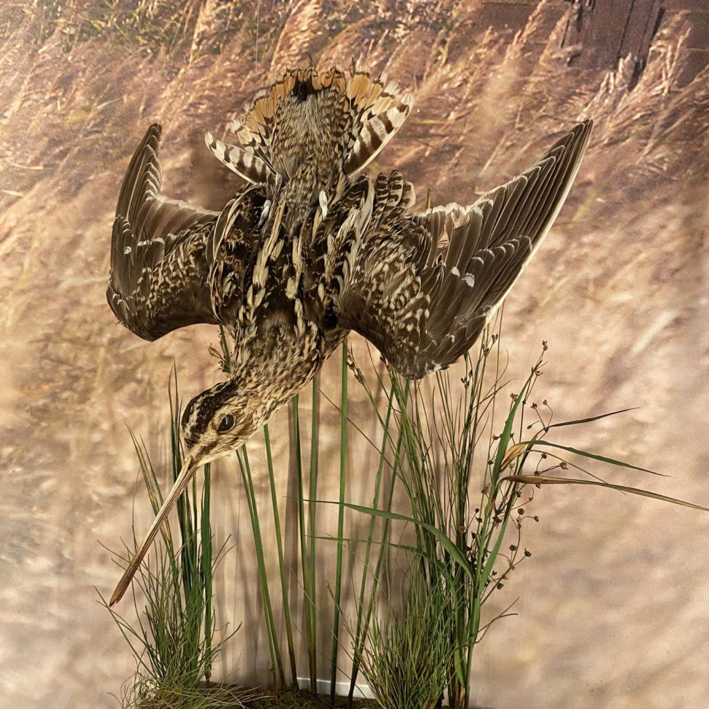 a photo of a taxidermy bird diving into reeds