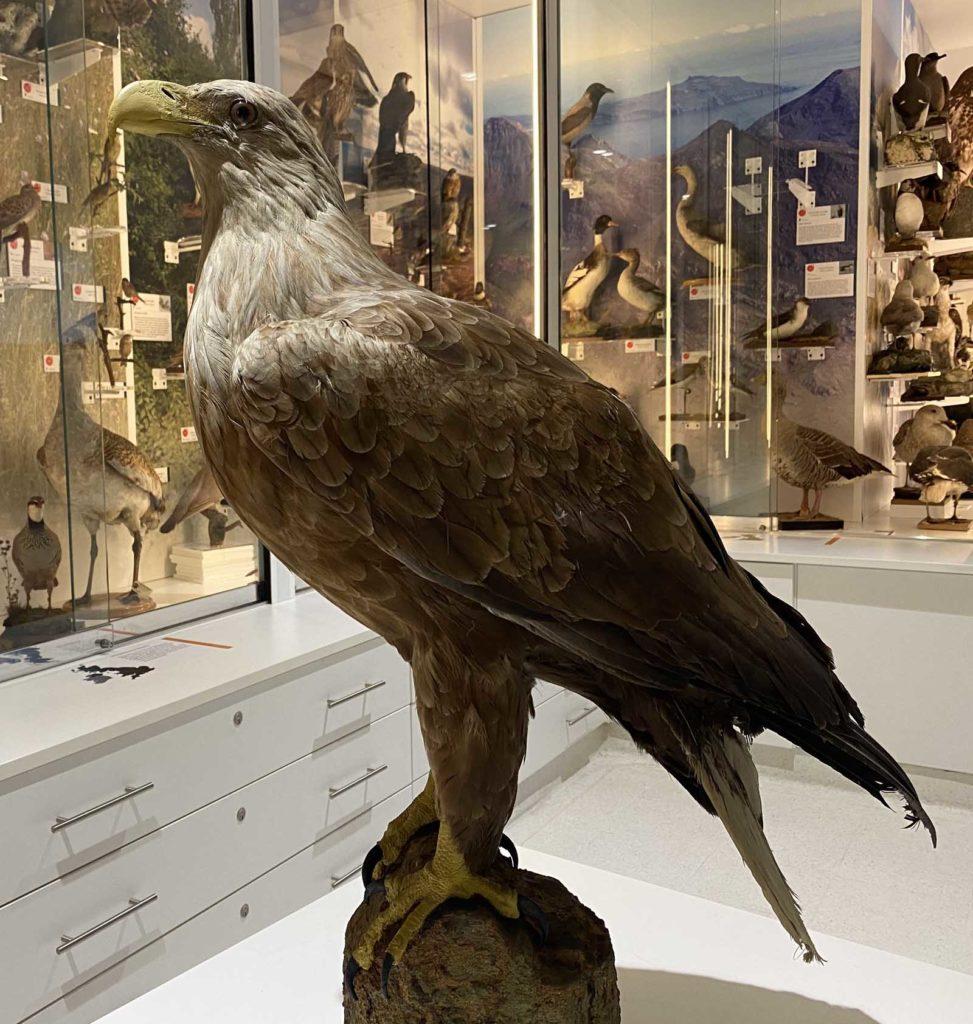 a photo of a large taxidermy eagle on a plinth