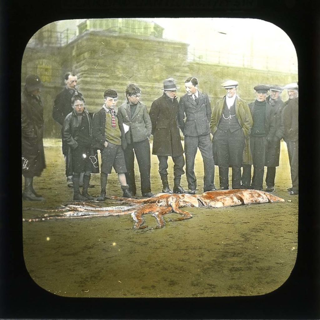an old colourised slide showing a squid laid out on the beach and people looking at it