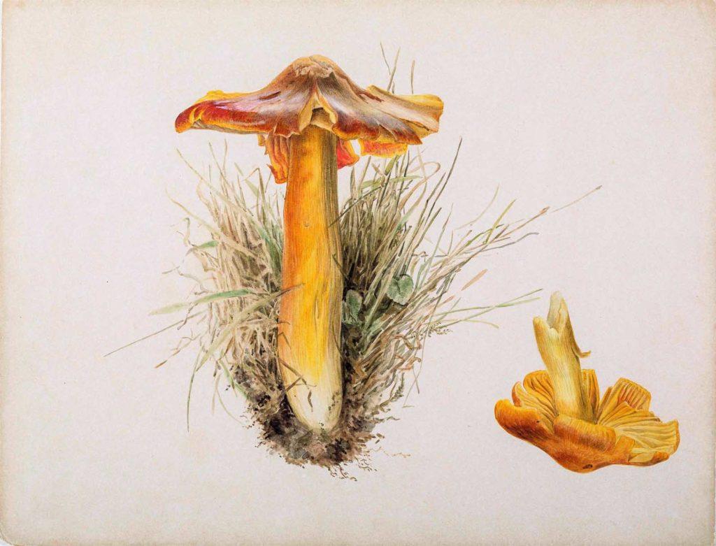 a drawing of a mushroom