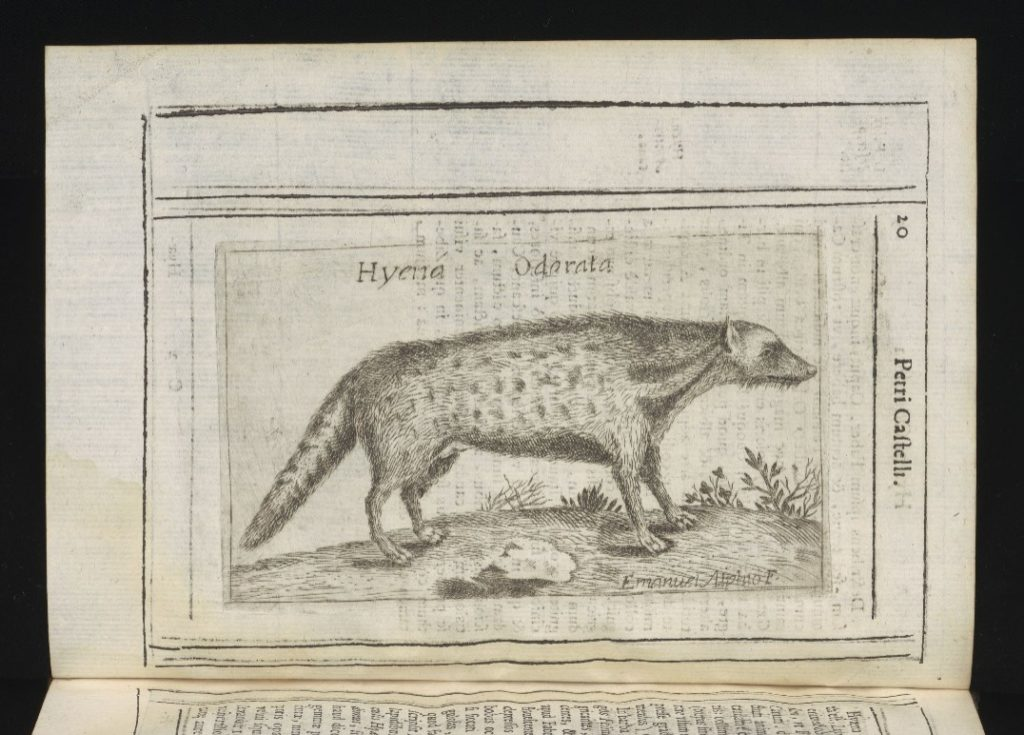 illustration of a hyena in a book