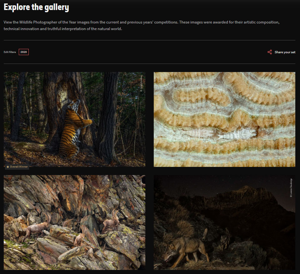 screenshot of online exhibition of wildlife photos