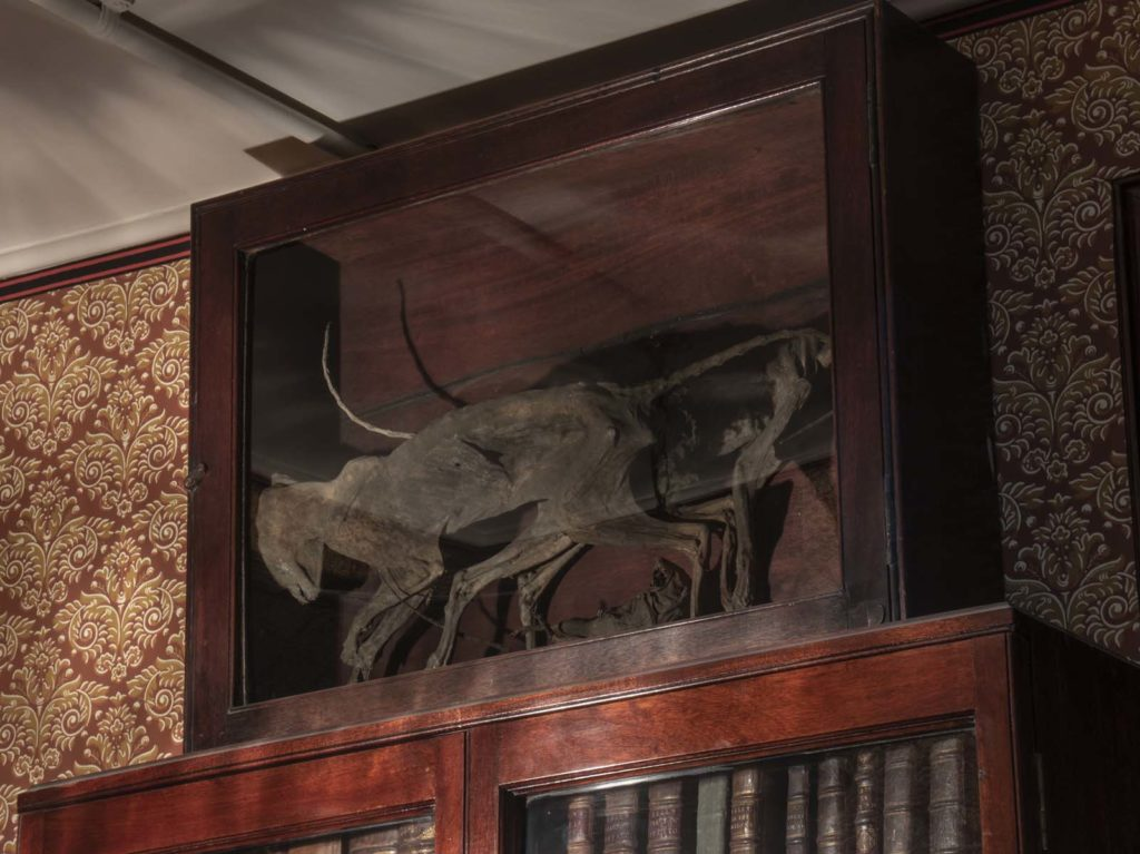 case containing two mummified cats
