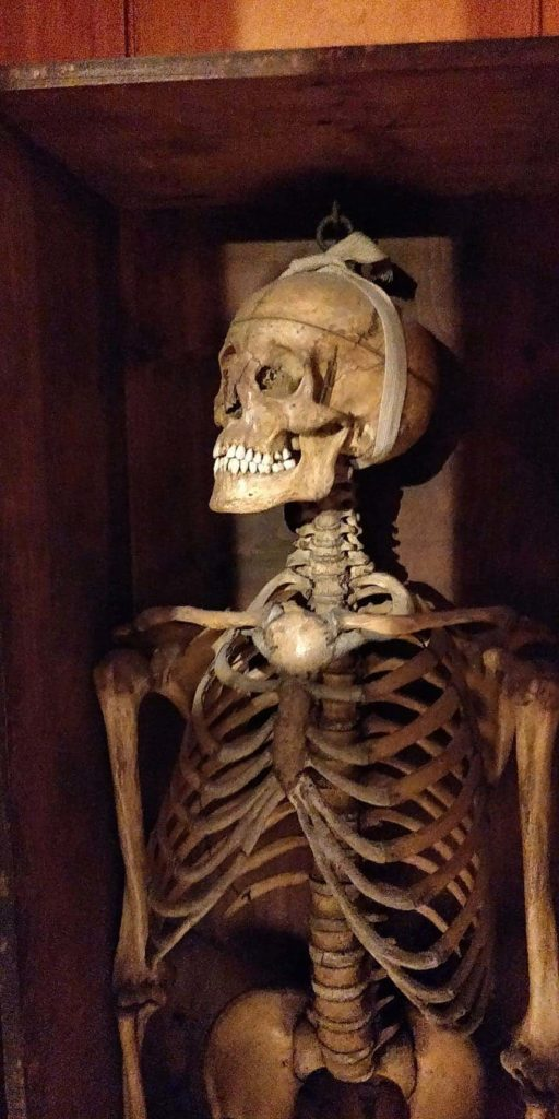 a photo of a human skeleton in a box