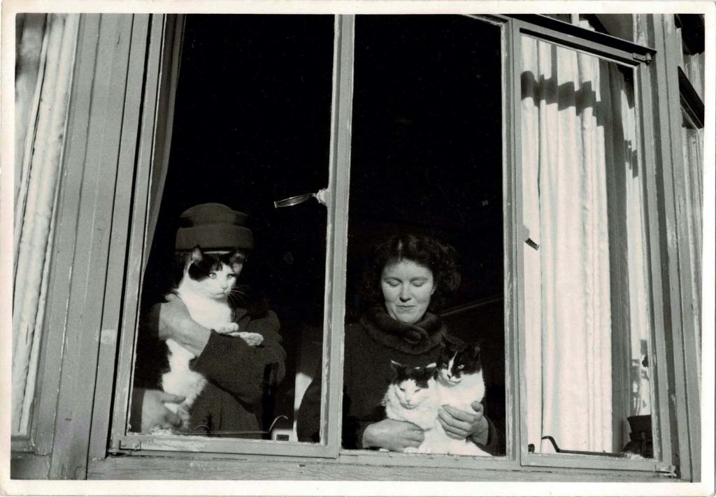 a photo of two women at a window with lots of cats