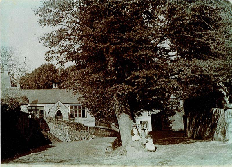 an old photograph of rad with a old tree in the centre of it
