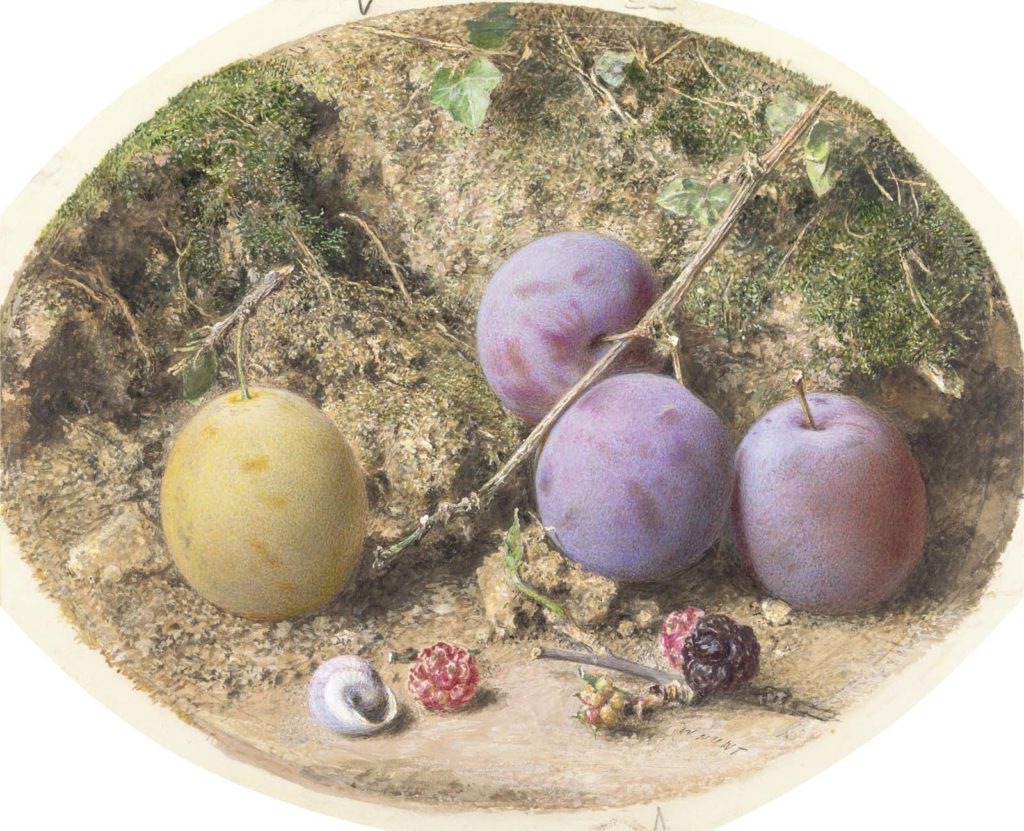 a close painted study of three purple and one yellow plums together with some berries