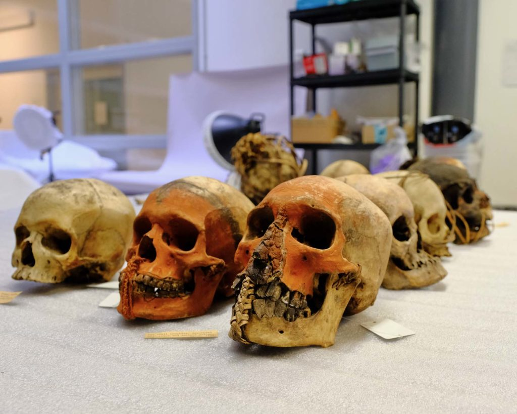 a photo of a group of human skulls on a table