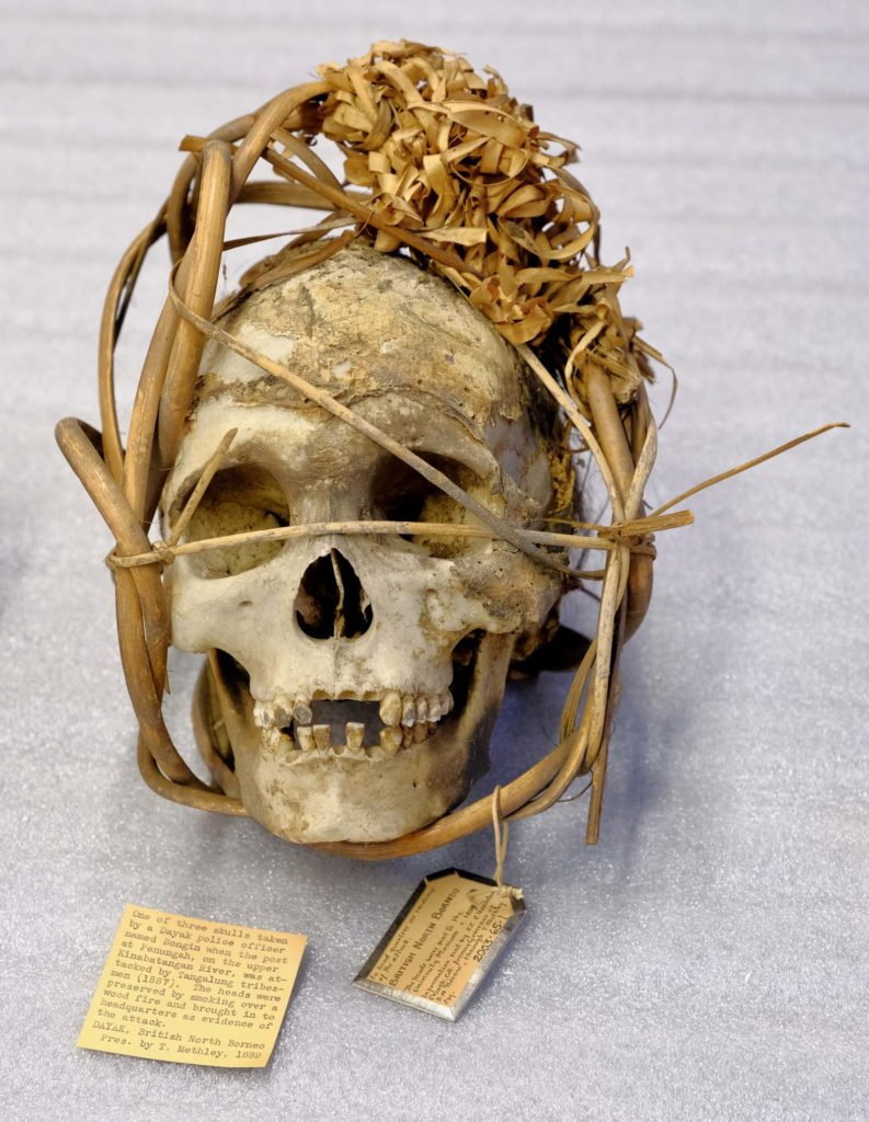 photo of skull framed by a woven basket