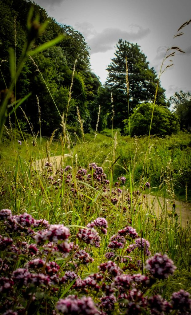 photo of a wildlflower meadow