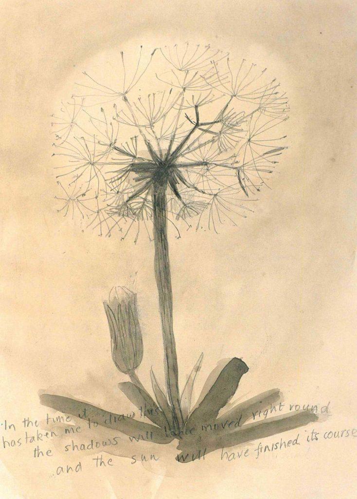 watercolour of a dandelion
