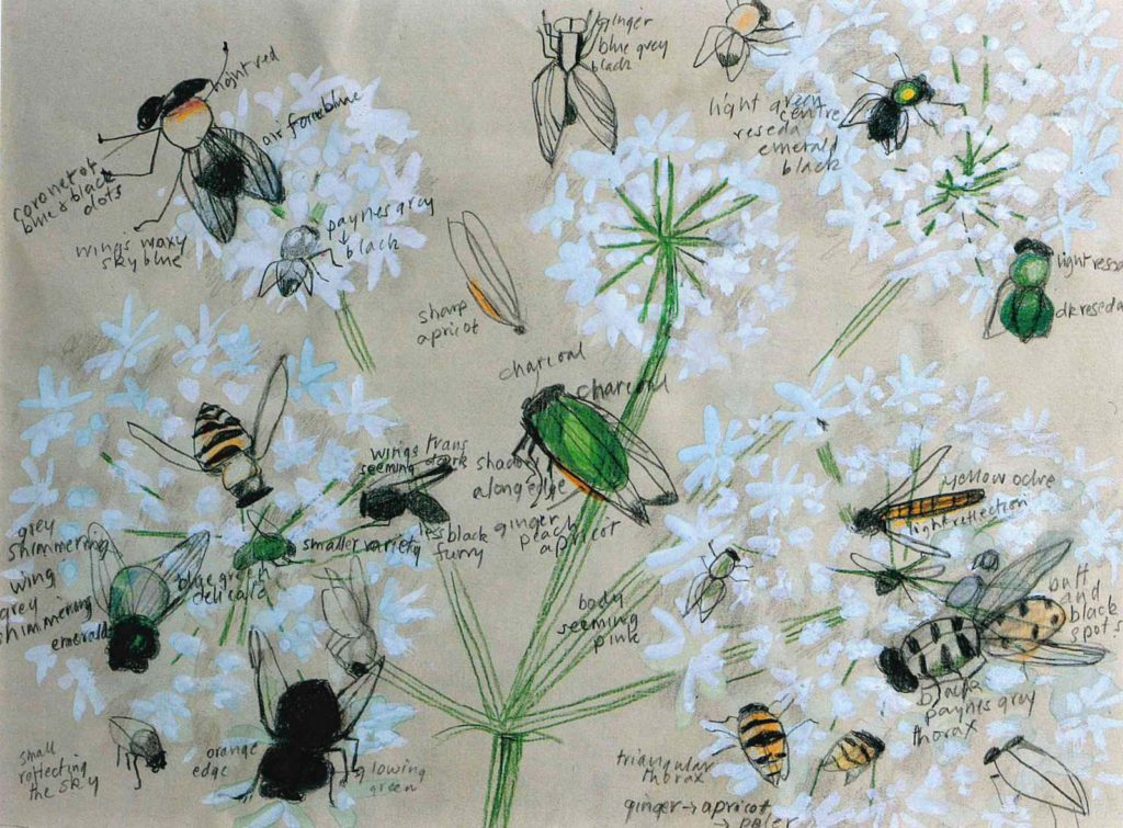 delicate watercolour sketch of insects on flowers