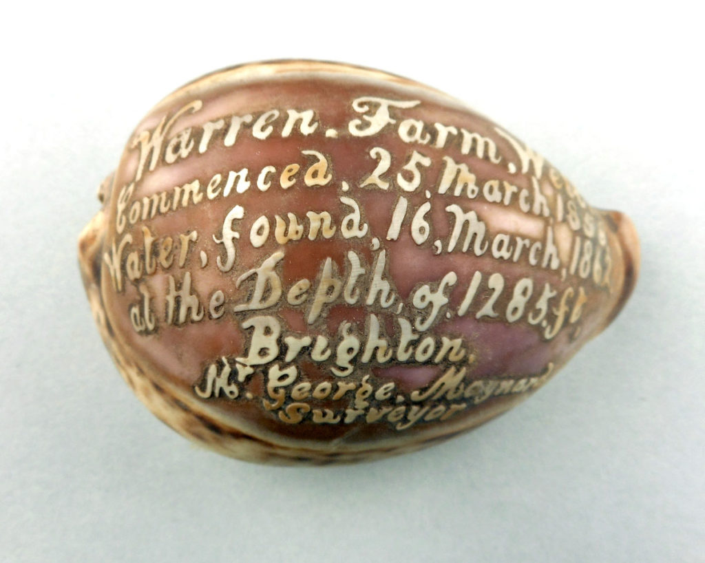 Cowrie shell with cameo writing relating to the Warren Farm Well