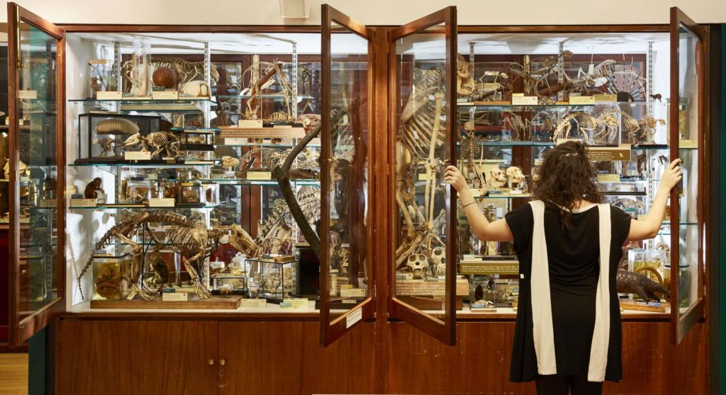 photo of a woman opening display cases crammed with bones and animal specimens