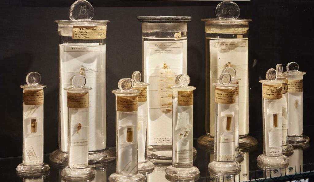 photo of a series of jars with termite samples inside