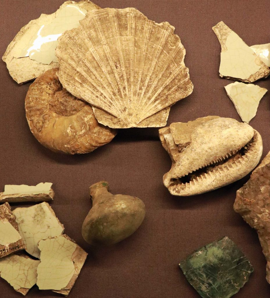 a photo of various sea shells and stone fragments