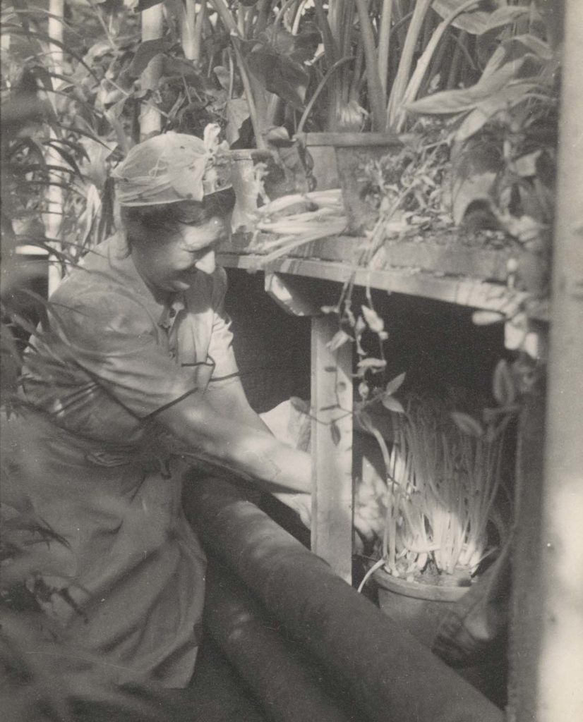 photo of a woman knneling down whilst working with plants in a greenhouse