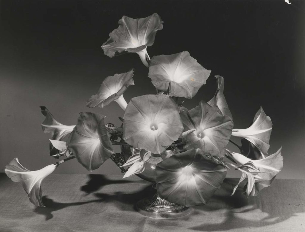 black and white photo of a spray of flowers