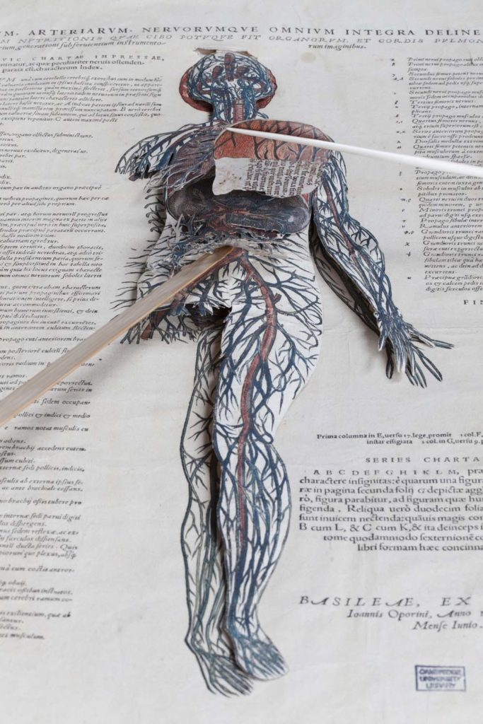 book with cut out showing the veins and organs of the human body