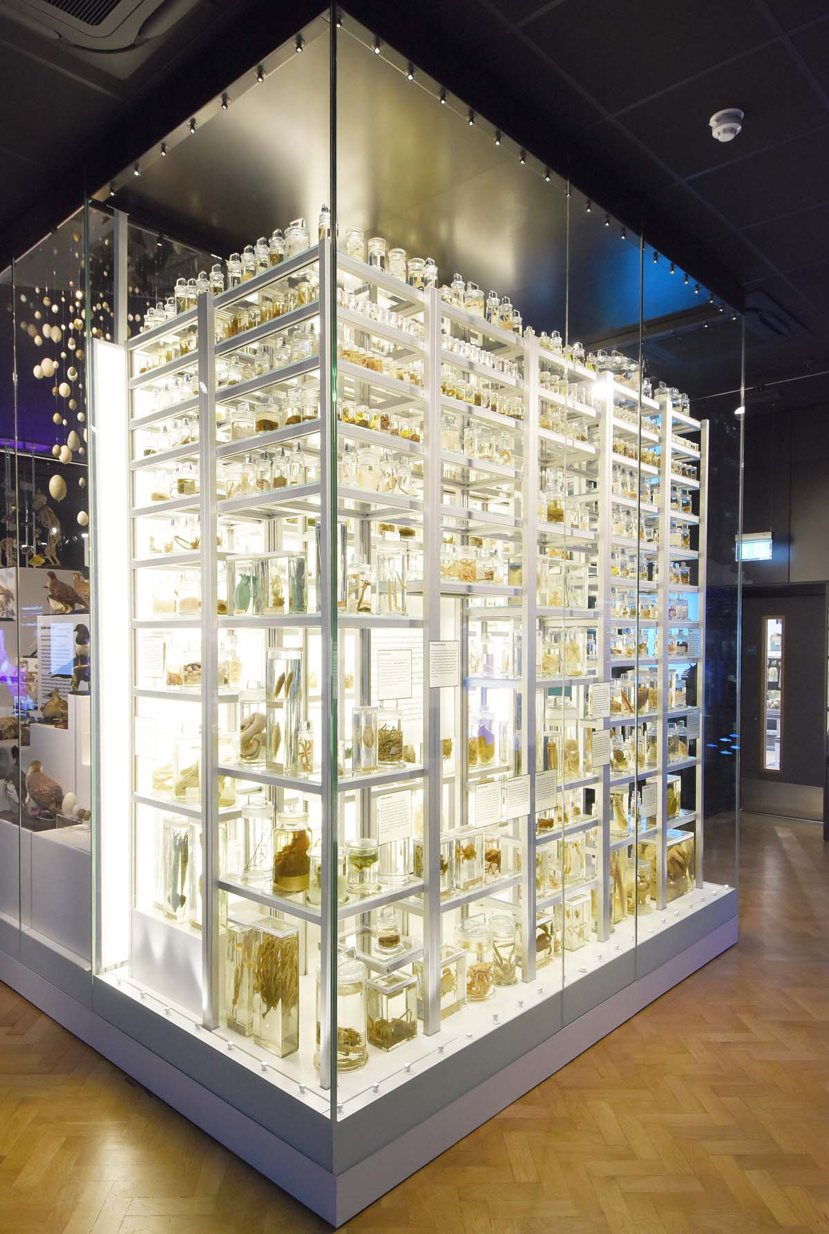 photo of display case filled with natural history specimens
