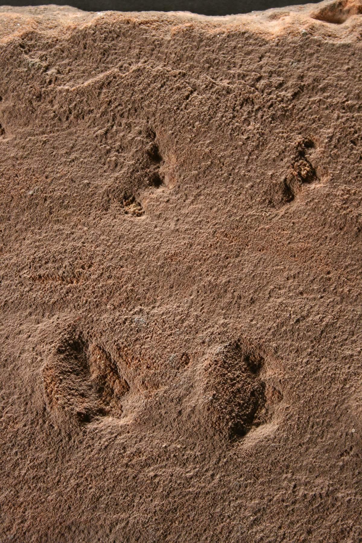 photo of fossilised footprints
