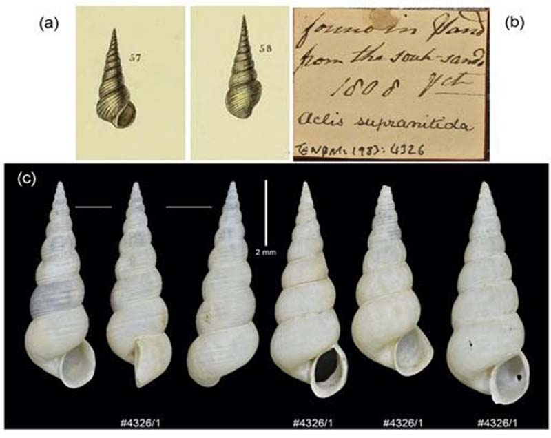 photo of sea shells together with illustrations and labels