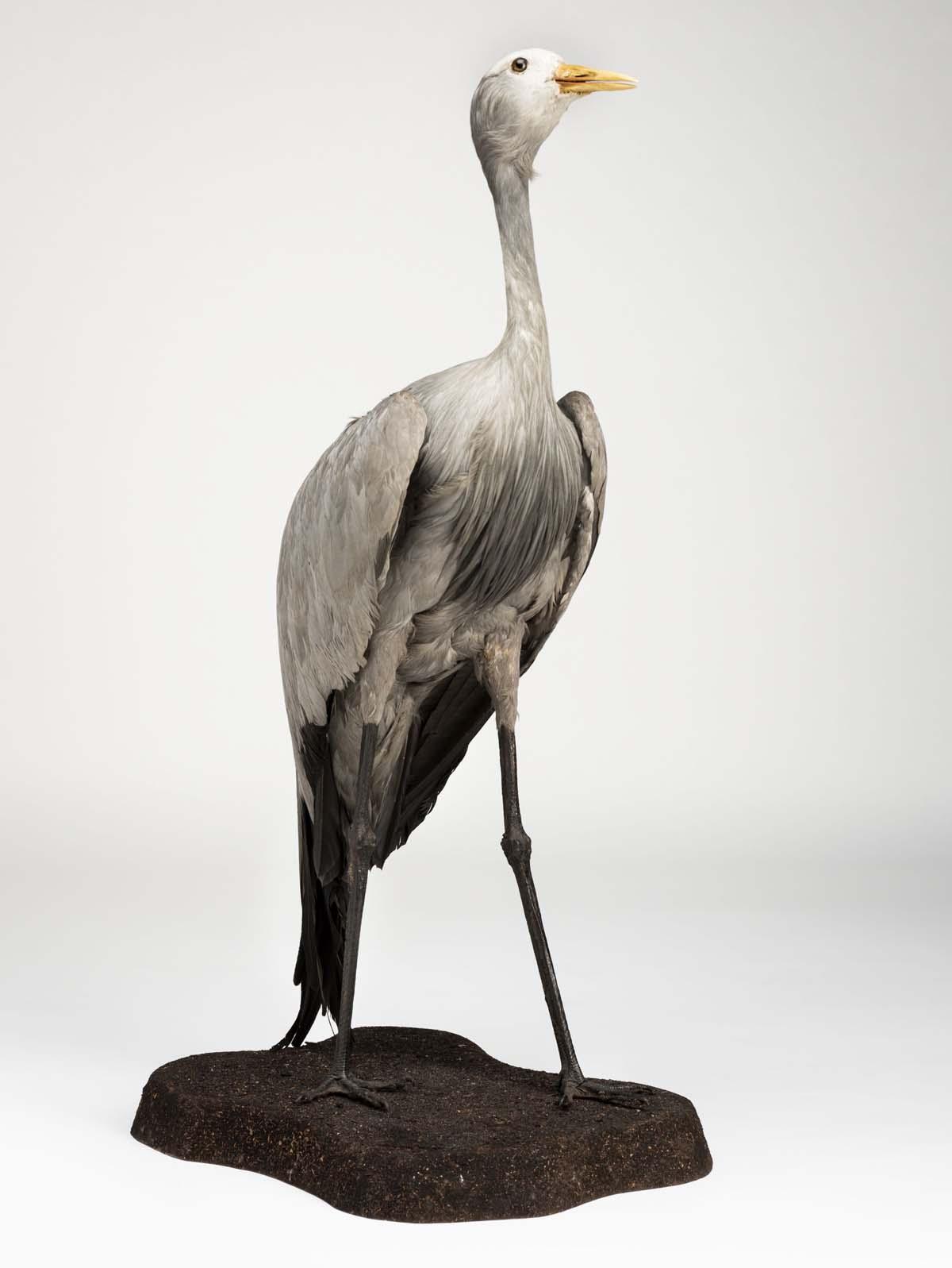 photo of a stuffed crane bird