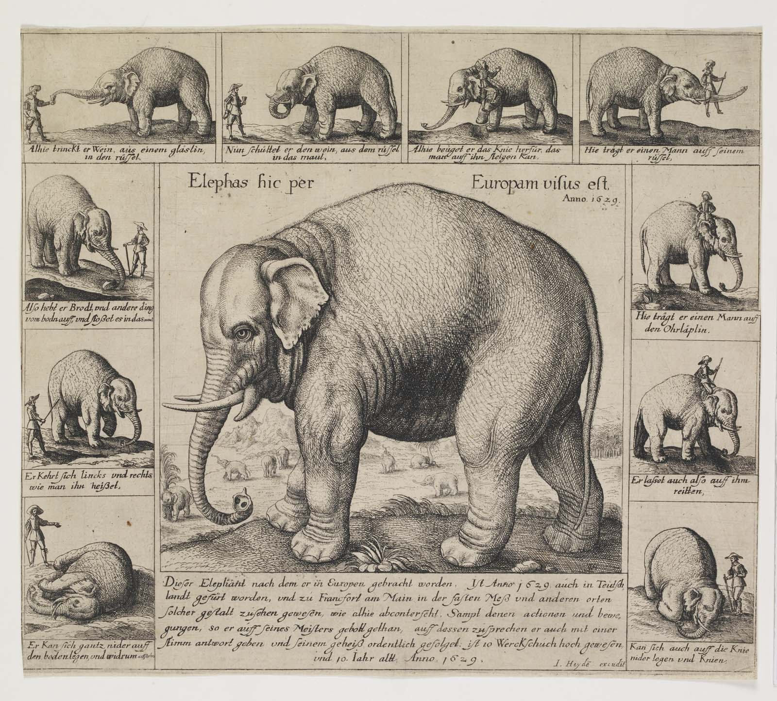 an old print showing various views of an elephant