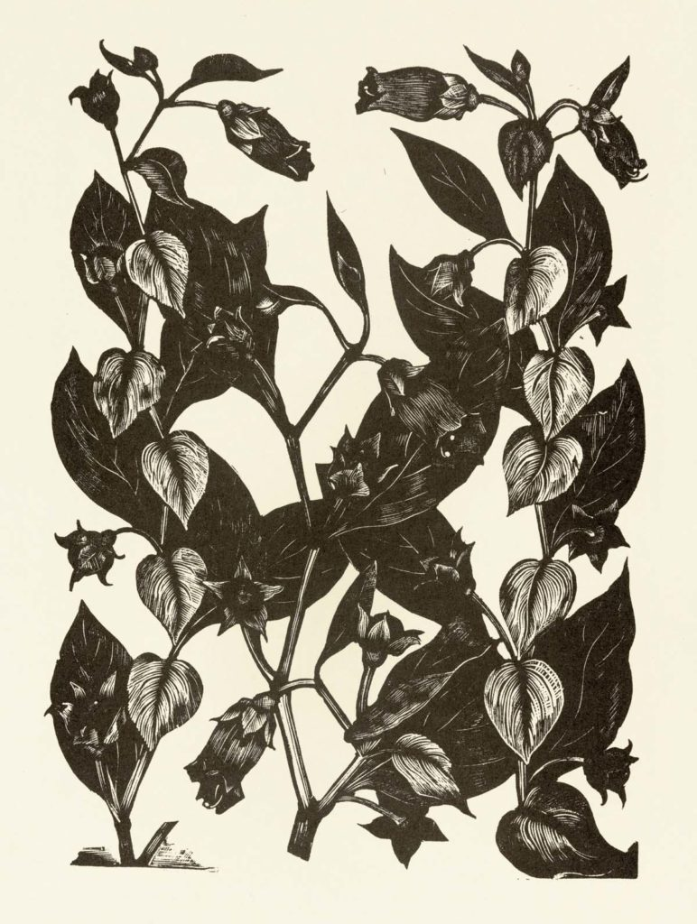 a black and white print of branches and leaves of a shrub
