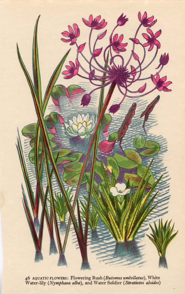 colour print showing seaside plants and flowers in green and pink