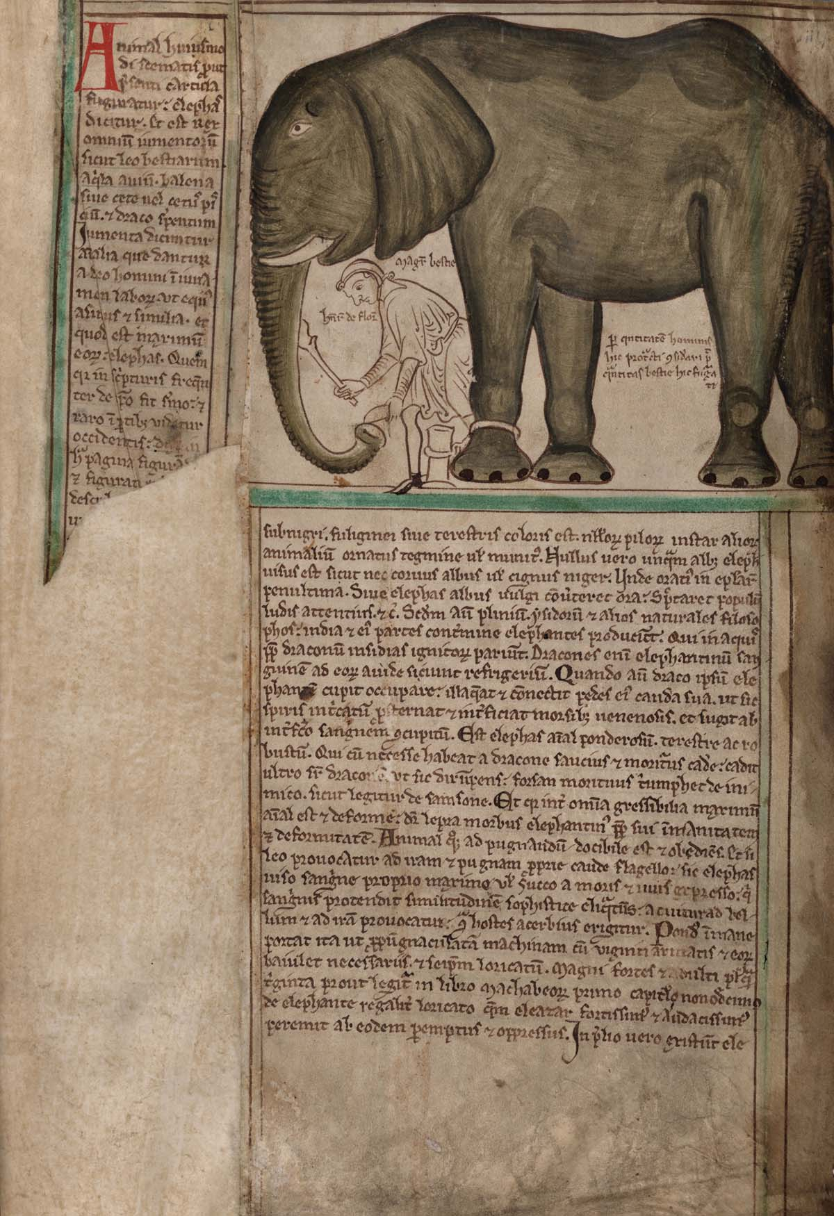 medieval manuscript page with Latin text and a large elephant at top