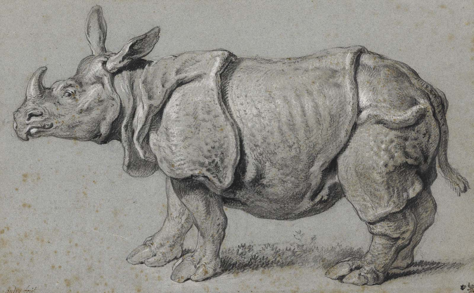 a charcoal drawing of a rhinoceros