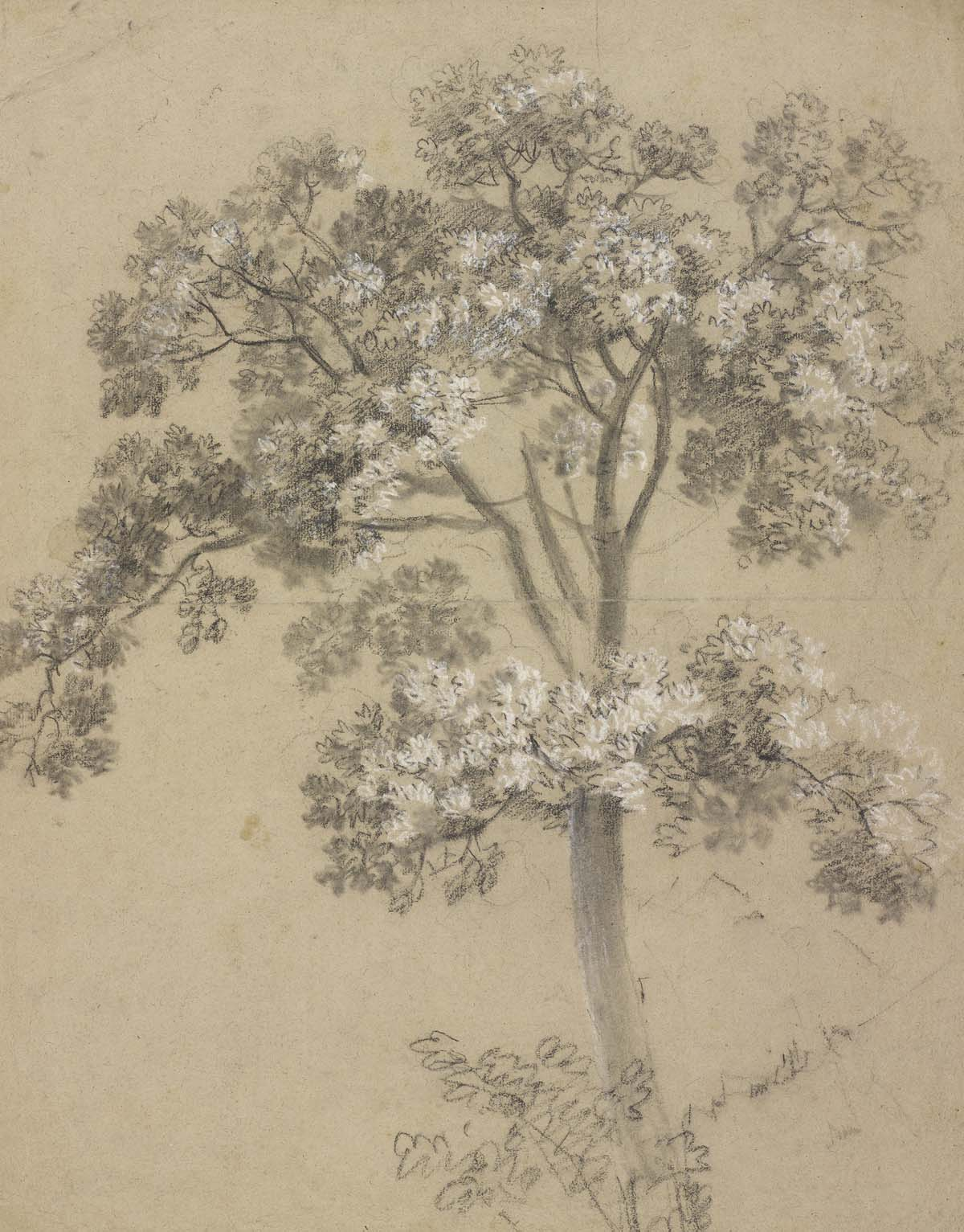 pencil and charcoal sketch of a tree