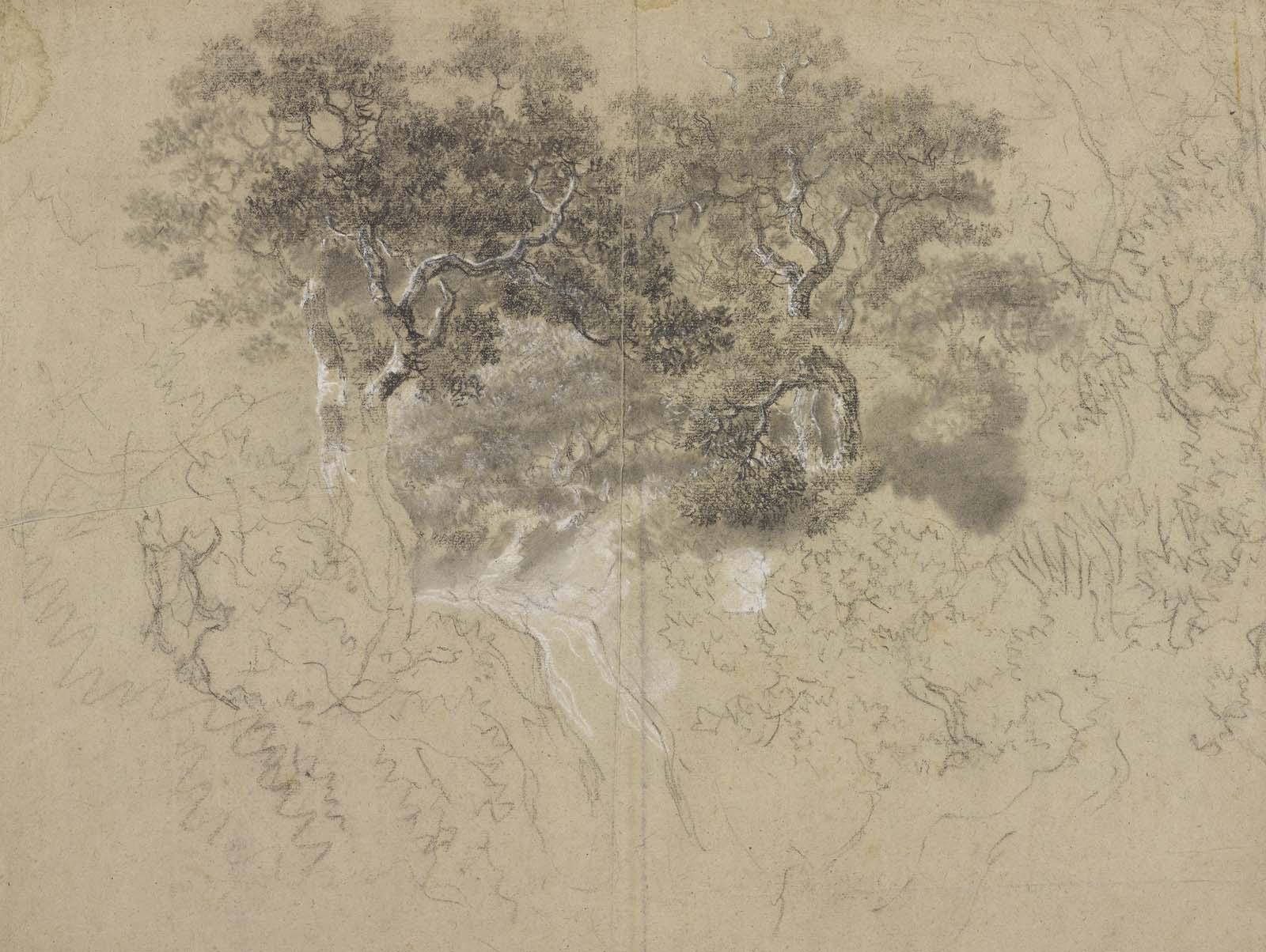 a pencil sketch of tree foliage